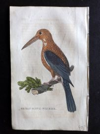 Brightly 1815 Antique Hand Col Bird Print. Great Kingfisher
